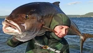 Zıpkınla 58 kilo ağırlığında, 1 metre 80 santim boyunda akya avladı (VİDEO)