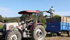 2019'da Sebze Üretiminin Artması Meyve Üretiminin Azalması Bekleniyor