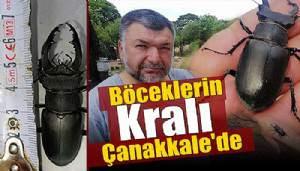 'Böceklerin kralı' Çanakkale'de görüldü (VİDEO)