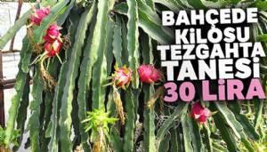 Bahçede kilosu, tezgahta tanesi 30 lira