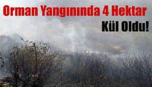 Biga'daki orman yangınında 4 hektar kül oldu