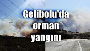 Gelibolu'da orman yangını (VİDEO)