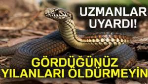Gördüğünüz yılanları öldürmeyin