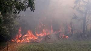 Çanakkale'de 3 hektar ormanlık alan zarar gördü (VİDEO)